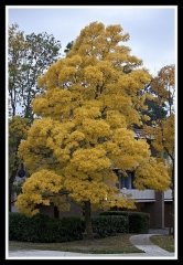 Hôtel de Montfaucon - English: Autumn Leaves begin to fall
