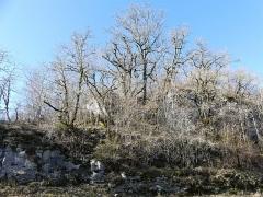 Cluzeau de Chambrebrune - Français:   Derrière les arbres, les rochers dans lesquels se trouve le cluzeau de Chambrebrune, Brantôme, Dordogne, France.