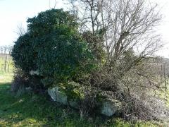 Dolmen d'Eylias - Français:   Le dolmen d\'Eylias vu de l\'ouest, Eymet, Dordogne, France.
