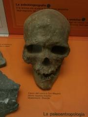 Abri de Cro-Magnon - Italiano: Cranio dell'uomo di cro-magnon - quaternario (Francia) - Museo di Storia Naturale di Milano