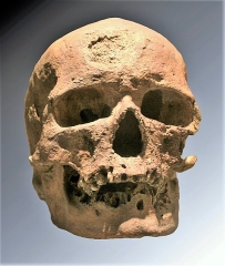 Abri de Cro-Magnon -  crâne de l'un des individus de l'abri de Cro-Magnon (Cro-Magnon 1), moulage vitrine du Musée de l'Homme, Paris