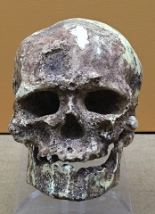 Abri de Cro-Magnon - English:   Hominid fossil reconstruction in the Beijing Museum of Natural History - China, July 2017.