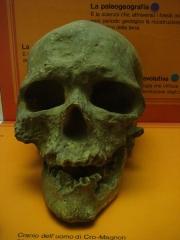 Abri de Cro-Magnon - Italiano: Museo civico di storia naturale a Milano, Italia.
