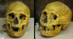 Gisement préhistorique du Pataud - English: Skull of a Protomagdalenian young woman in the Abri Pataud rock shelter, Les Eyzies-de-Tayac, Dordogne, Aquitaine, France. Age: between 16 and 18 years, and 20,600 years BP.