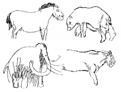 Grotte des Combarelles I - Dansk: Vægtegning i hulen Combarelles, Dordogne (vild hest, hulebjørn, mammut, huleløve).