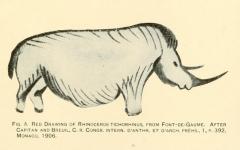 Grotte de Font-de-Gaume (grotte du Sourd) - Español: Grotte de Font-de-Gaume. Rinoceronte lanudo