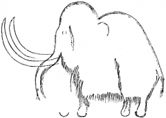 Grotte de Font-de-Gaume (grotte du Sourd) - English: Engraved outlines and hair underlying the painting of one of the mammoths, from the wall of the Galerie des Fresques, Font-de-Gaume. After Breuil.