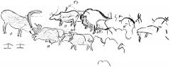 Grotte de Font-de-Gaume (grotte du Sourd) - English: Plan of a portion of the left wall decoration in the Galerie des Fresques at Font-de-Gaume, showing reindeer and the procession of bison. After Breuil.