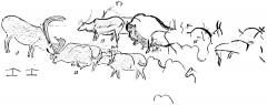 Grotte de Font-de-Gaume (grotte du Sourd) - English: Plan of a portion of the left wall decoration in the Galerie des Fresques at Font-de-Gaume, showing reindeer and the procession of bison. After Breuil.
