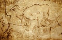 Grotte du Cro de Granville ornée de peintures et de gravures pariétales - English: Cave painting in the Grotte de Rouffignac