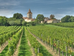 Eglise Saint-Pierre - English: French vineyards in the Bordeaux wine region of Blaye