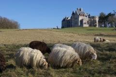 Château Abbadia -  Château d'Abbadie et brebis paissant. Vue nord-est du château. Pyrénées Atlantiques, France.
