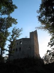 Ruines du château de Spesbourg -  Château de Spesbourg Spesbourg castle