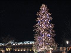 Bâtiment de l'Aubette -  Sapin de Noël sur la place Kléber de Strasbourg