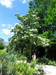 Jardin botanique -