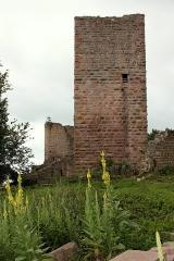 Ruines des châteaux de Weckmund et de Wahlenbourg -  La tour du château du Wahlenbourg à Husseren- les- châteaux
