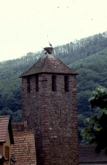 Tour dite de l'Hôpital -  Alsace Alsace Kaysersberg Tour Porte Haute Cigogne 041990