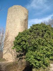Ruines du château de Pflixbourg - English: Pflixbourg tower (looking NE)