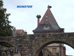 Ancienne abbaye bénédictine Saint-Grégoire -  MUNSTER