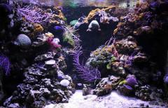 Ancien Musée National des Arts Africains et Océaniens, devenu Cité nationale de l'histoire de l'Immigration -  Aquarium Coral reef