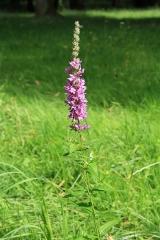 Domaine dit Désert de Retz - English:   Flowers in the Désert de Retz park in Chambourcy, France