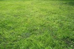 Domaine dit Désert de Retz - English:   Grass in the Désert de Retz park in Chambourcy, France