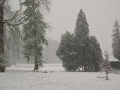 Ancien château de Grignon, actuelle école nationale d'agriculture de Grignon -  Le parc de l\'Institut national agronomique à Thiverval-Grignon sous la neige.