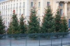 Faculté de Droit de Paris -  Christmas in Paris