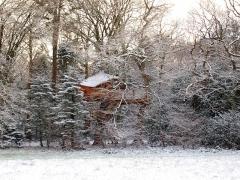Château de Kermenguy - English: tree house narcissus, France, 29233