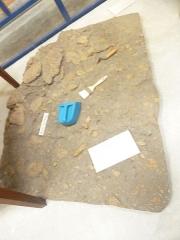 Musée préhistorique à Pors Carn - Français:   Menez-Dregan en Plouhinec (Finistère): moulage d\'un foyer de la couche 5c, datant de 300 000 ans environ (paléolithique inférieur). La structure, aménagée avec des blocs de granite, présente des traces de chauffe mises en évidence par des méthodes physico-chimiques et est jonchée de nombreux éclats et outils taillés (Musée de la préhistoire finistérienne de Penmarc\'h)