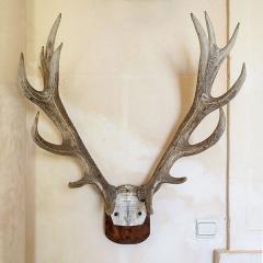 Allée couverte coudée de Mané-er-Loh, dite Mané-Bras - Trophée d'un cerf dix cors chassé à la Saint-Hubert 1829 - Château de Tanlay (Yonne, région Bourgogne, France)