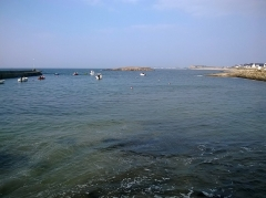 Ile Thinic -  Morbihan Saint-Pierre-Quiberon Portivy Port Ile Thinic 23032016