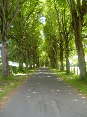 Château de Cordès - English: Avenue (alley of trees) approaching the Chateau de Cordes