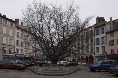 Hôtel de ville - English:  Liberty tree planted to mark the end of the First World War.