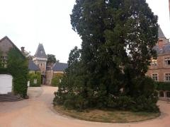 Château de Busset -  Cour intérieure du château de Busset, avec son séquoia.