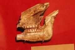 Grotte du Mas-d'Azil - Musée d'Archéologie Nationale - Salle Piette - tête de cheval décharnée sculptée dans un bois de renne. Magdalénien moyen. MAN47026