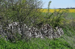 Dolmen de Saint-Antonin - English: Dolmen de Saint-Antonin, Salles-la-Source, Aveyron, France