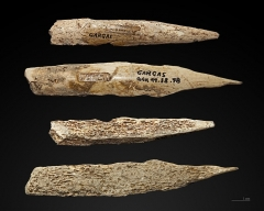 Grotte de Gargas - English:  Awl made from abraded bone. Both sides of two Awls. Stage: Upper Paleolithic - Gravettian  (29,000 to 22,000 years Before the Current Era) Locality: Gargas caves, Hautes-Pyrénées, France Former collection of Félix Régnault.</dd>