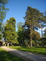 Château d'Hutaud - Français:   Arbres du parc, pris en avril 2016 vers 18h,
