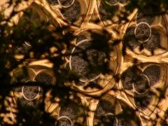 Collégiale Saint-Martin et maisons adossées à son chevet -  Picture of the rosace from the Collegiale St Martin in Montpezat de quercy France