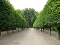 Jardin des Prés Fichaux - Français:   Bourges - Jardin des Prés-Fichaux