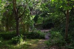 Maison des Milelli - Français:   Ajaccio, arboretum dans la domaine des Milelli