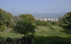 Maison des Milelli - Français:   Ajaccio, jardin potager dans la domaine des Milelli