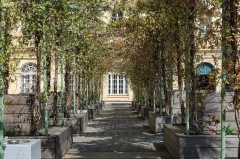 Palais Fesch - English: At the left side in the court of Palias Fesch (Ajaccio, Corsica) there is a nice Pergola.