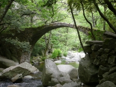 Pont de Zaglia -  Walking path between Ota and Evisa - Pont génois de Zaglia, Spelunca Canyon