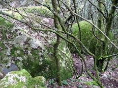 Site archéologique de Cucuruzzu -  Cucuruzzu (Corse-du-Sud, France) - Site préhistorique -    Blocs recouverts de mousse bordant le sentier, au début du parcours balisé, à environ 200 mètres de l'entrée.