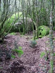 Site archéologique de Cucuruzzu -  Cucuruzzu (Corse-du-Sud, France) - Site préhistorique -   Blocs recouverts de mousse bordant le sentier, au début du parcours balisé, à environ 200 mètres de l'entrée.   Certains de ces blocs sont plus ou moins ronds, effet de l'érosion qui parfois en a évidé la pierre. Des fissures, des trous aux formes étranges peuvent ainsi être observés. Certaines de ces cavités, présentant des dimensions assez importantes, ont pu être utilisées comme abris par l'homme.