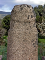Alignements de statues-menhirs dénommés Rinaiu et I Stantare - English: Menhir inCauria-Stantari, Corsica