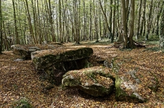 Allée couverte - Français:   Allée couverte de Dampmesnil (Eure, Normandie).