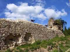 Ruines du château fort - English: Goats on a wall of the medieval castle of Montfort-sur-Risle (departement Eure, Haute-Normandie, France), which was built in 11th century.